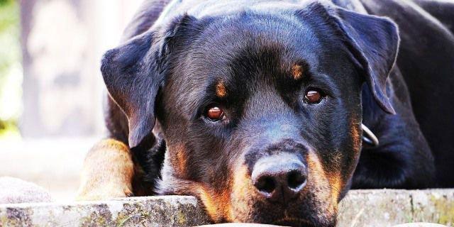 seguros de salud para perros que es lo que debes hacer