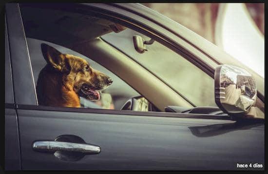 Precios de Seguros para Perros