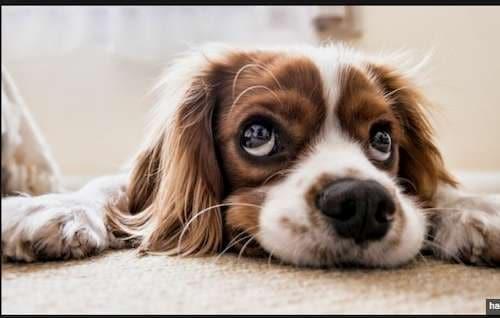 seguros de mascotas con asistencia veterinaria