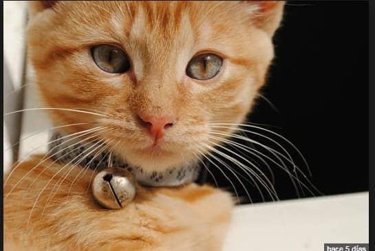 seguros para gatos