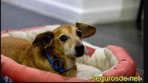 compañías de seguros de responsabilidad de civil para perros